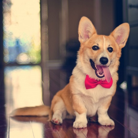 dapper puppy